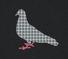 Pigeon Pied-de-Poule