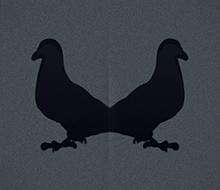 Pigeon Rorschach