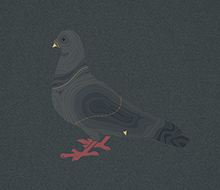 Pigeon topographique
