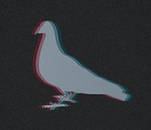 Pigeon troidé